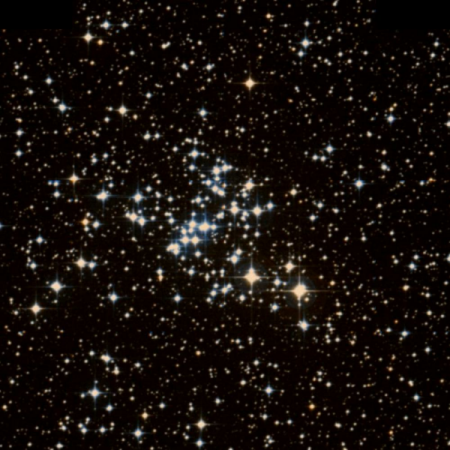 Image of Butterfly Cluster