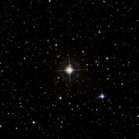 Image of X-Pup