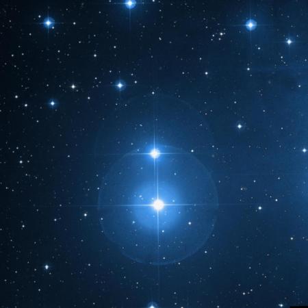 Image of Pleione