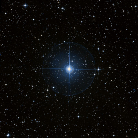 Image of t-Pup
