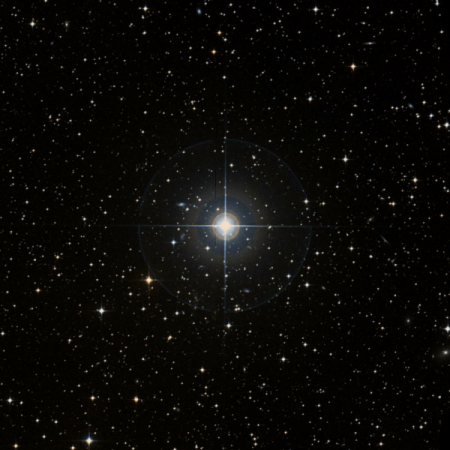 Image of H-Pup