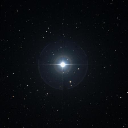 Image of Chara