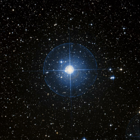 Image of P-Pup