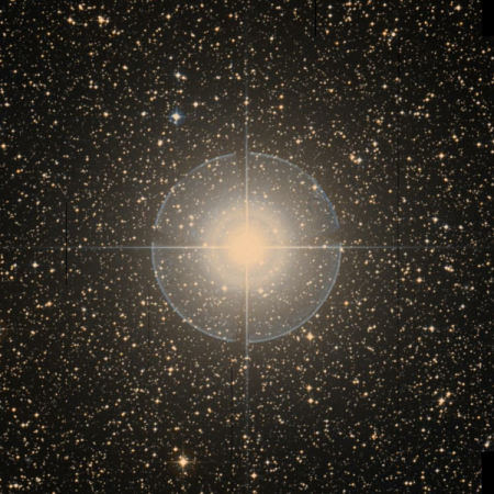 Image of Tureis