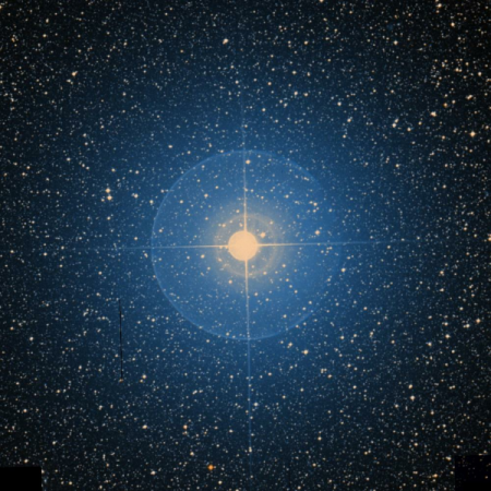 Image of Ascella